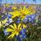 Flowers on Matjiesfontein